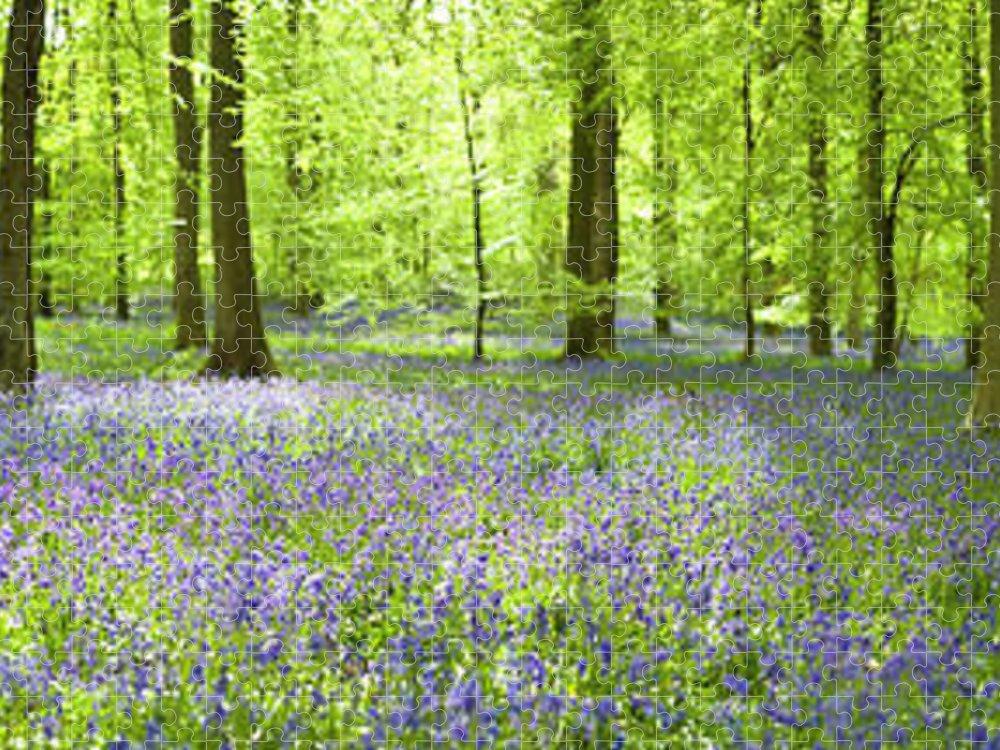 Scenics Puzzle featuring the photograph Wonderful Woodland by Pkfawcett