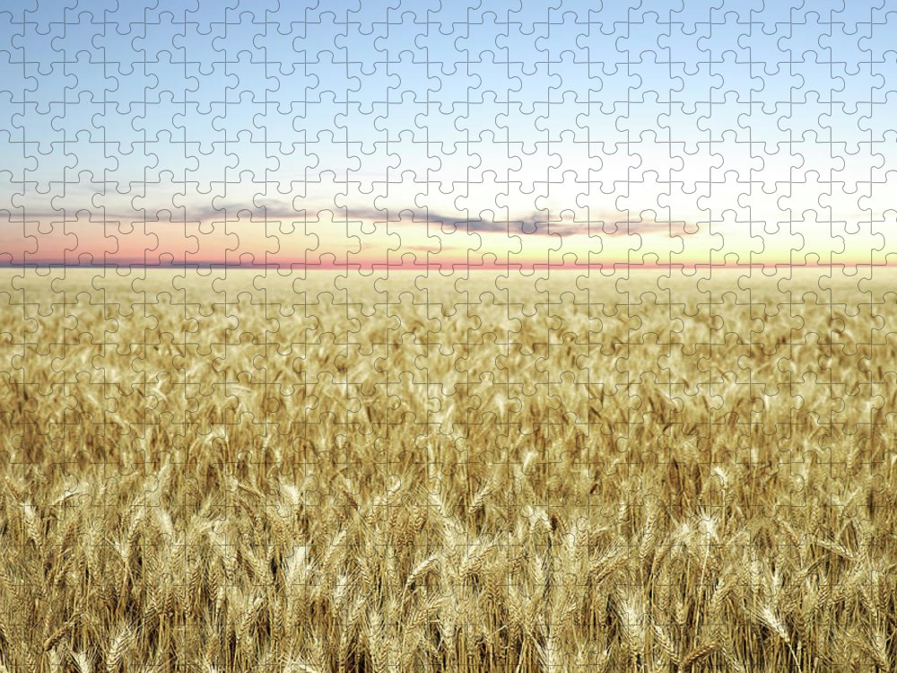 Scenics Puzzle featuring the photograph Xxl Wheat Field Twilight by Sharply done