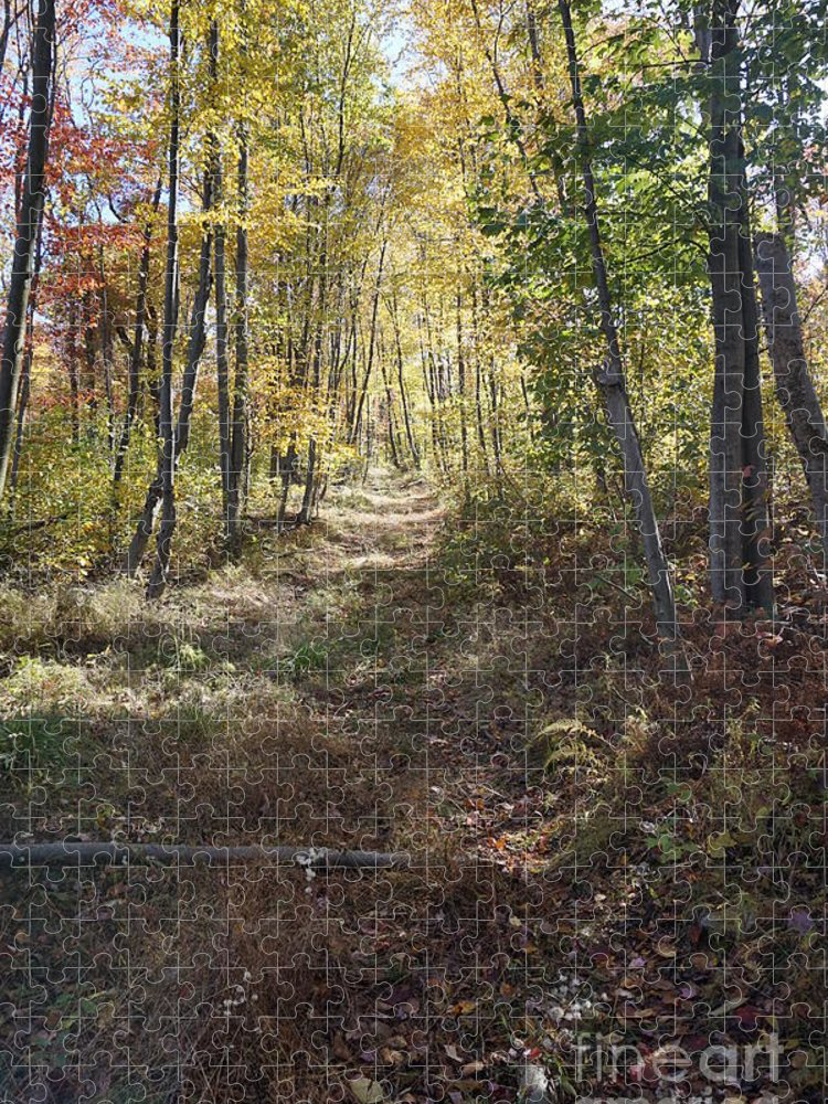 Hidden Trail Puzzle featuring the photograph Hidden Trail by Chris Naggy