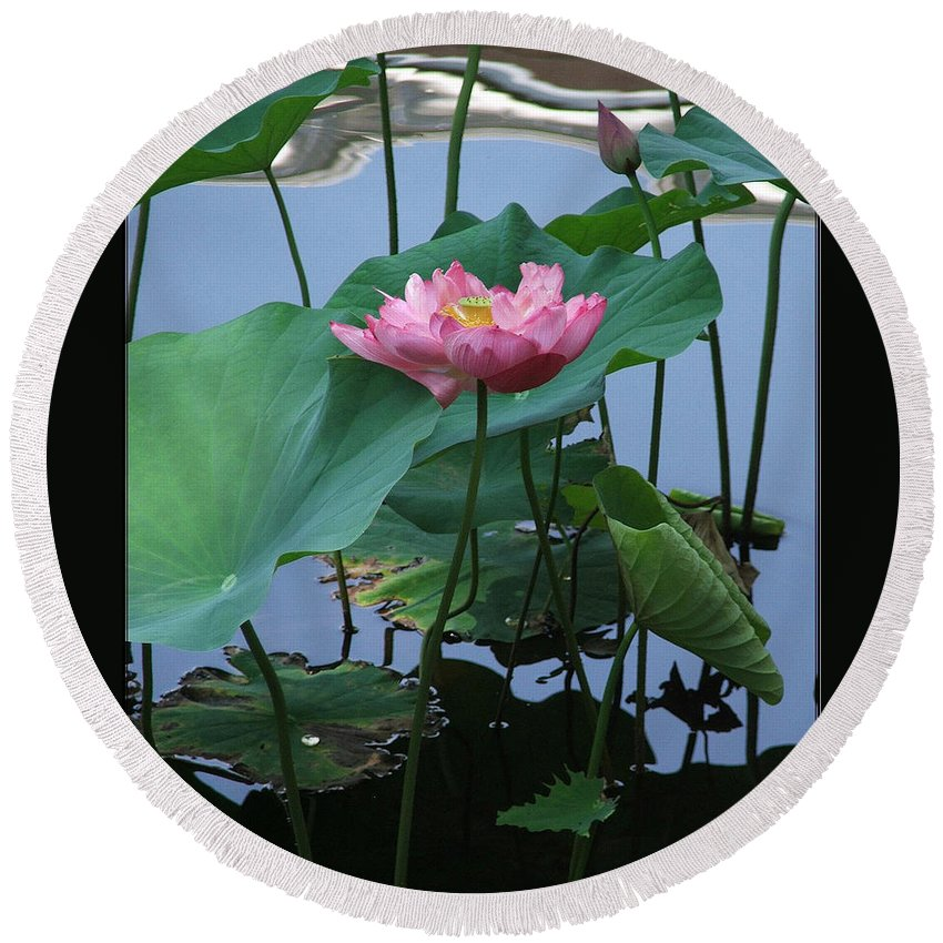 Lotus Round Beach Towel featuring the photograph Lotus Flower At Calloway by Robert Meanor