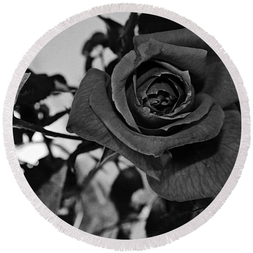 One Rose Round Beach Towel featuring the photograph Rose In Black And White by Barbara Griffin