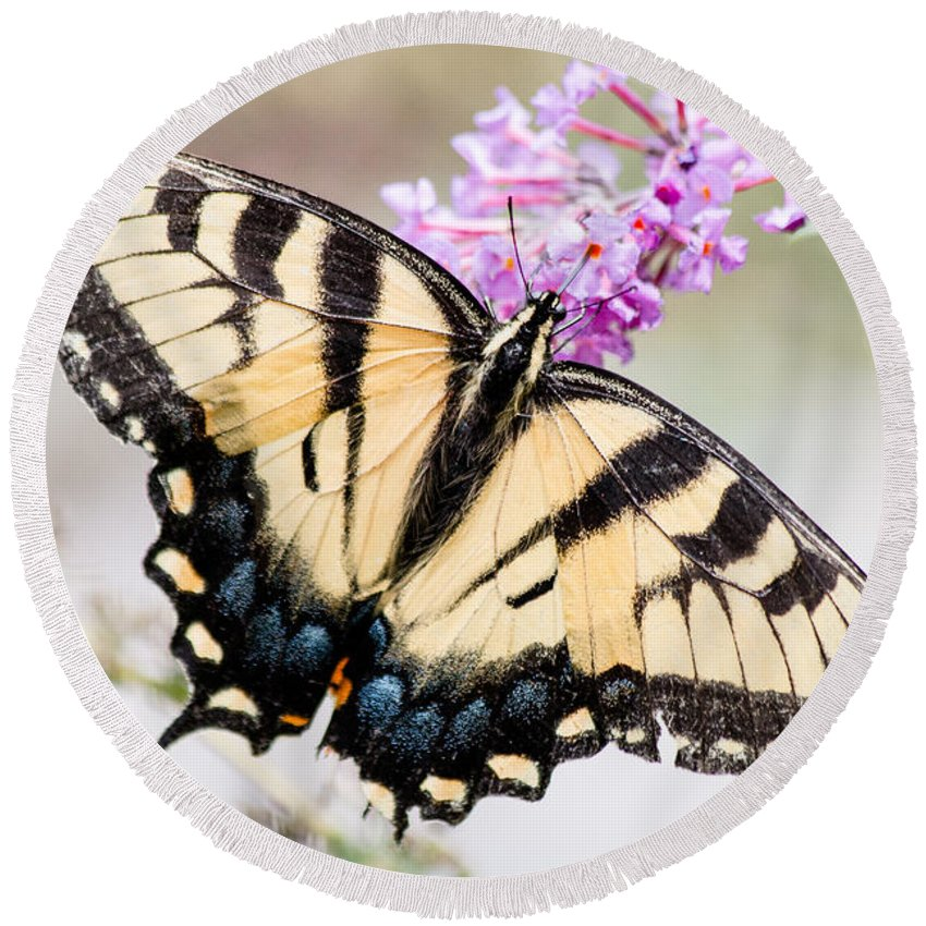 Butterfly Round Beach Towel featuring the photograph Tiger Swallowtail by Gaurav Singh