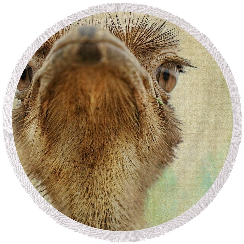 Ostrich Round Beach Towel featuring the photograph Ostrich Closeup by Terry Fleckney