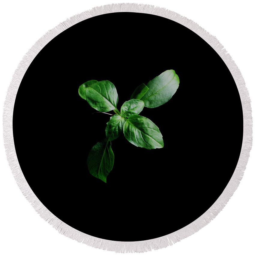 Herbs Round Beach Towel featuring the photograph A Sprig Of Basil by Romulo Yanes