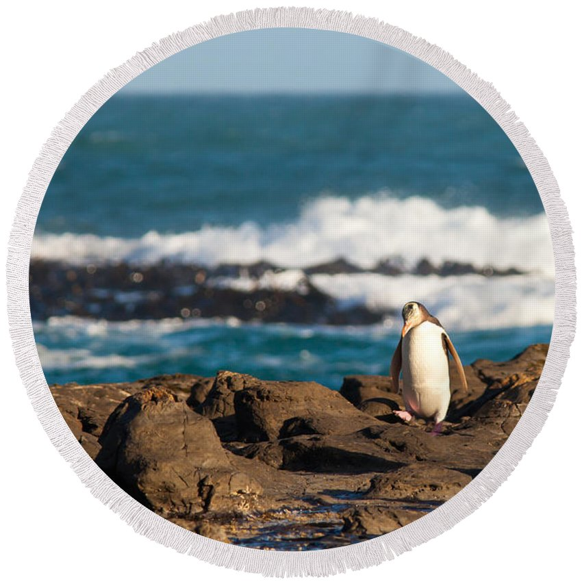 South Island Round Beach Towel featuring the photograph Adult Nz Yellow-eyed Penguin Or Hoiho On Shore by Stephan Pietzko