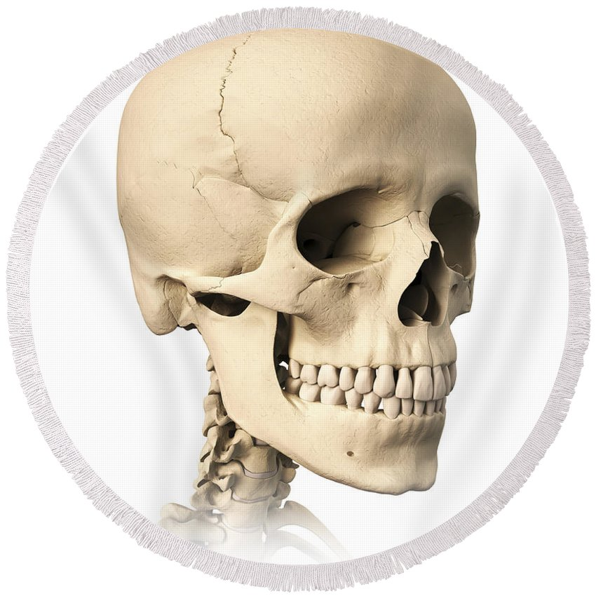 Anatomy Of Human Skull, Side View Round Beach Towel for Sale by ...