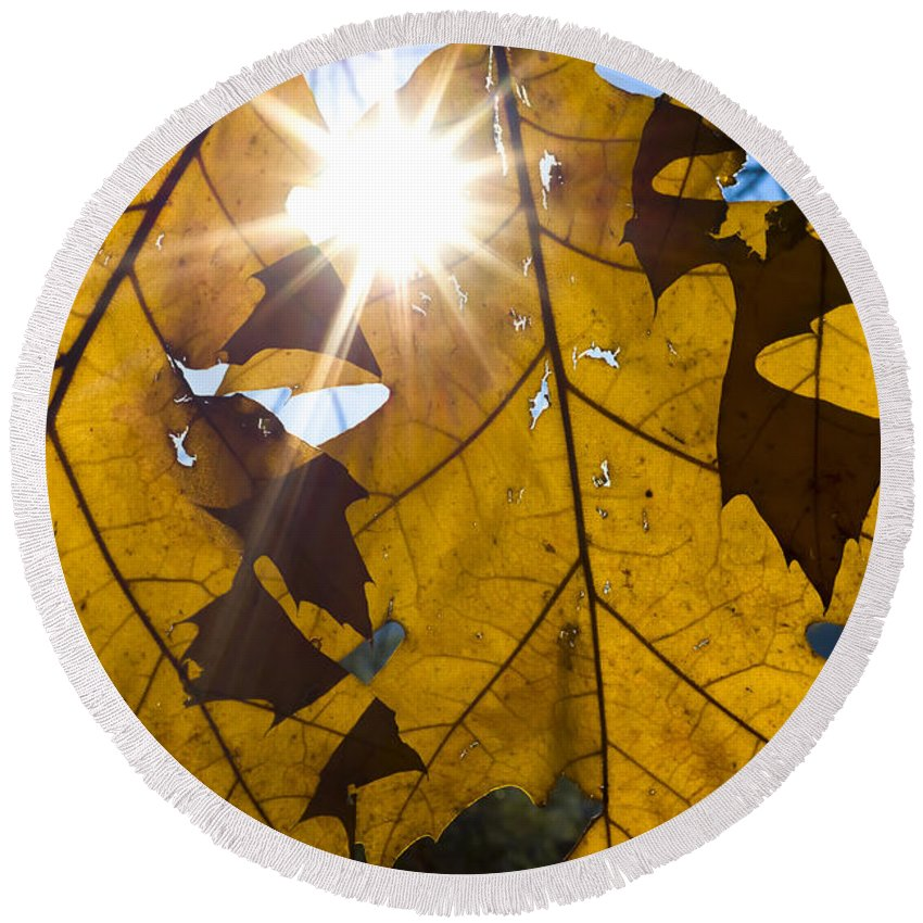 Leaves Round Beach Towel featuring the photograph Autumn Leaves by Mats Silvan