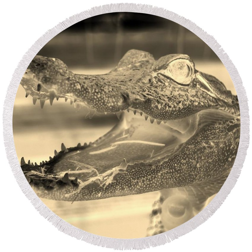 Alligator Round Beach Towel featuring the photograph Baby Gator Neg Dark Sepia by Rob Hans