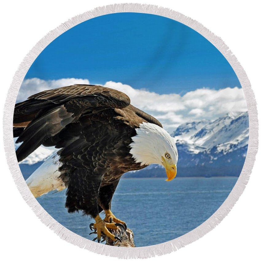Alaska Round Beach Towel featuring the photograph Bald Eagle by Clint Pickarsky