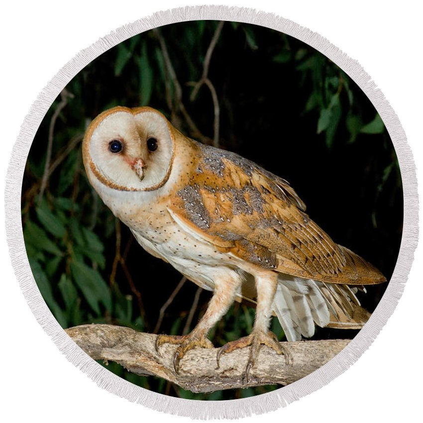 Barn Owl Round Beach Towel featuring the photograph Barn Owl by Anthony Mercieca