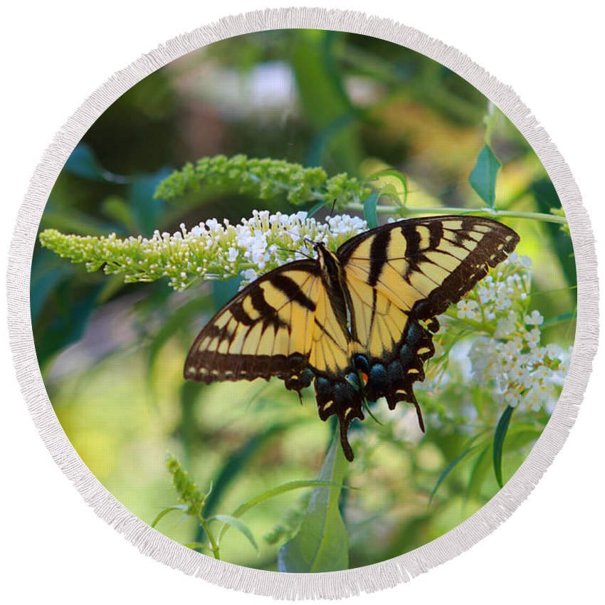 Butterfly Round Beach Towel featuring the photograph Beautiful Butterfly Pollination by John Lan