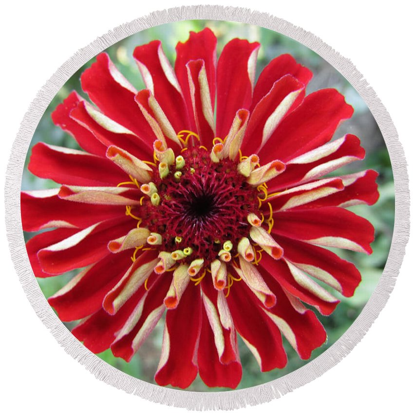 Flower Round Beach Towel featuring the photograph Beautiful Opening by Jamie Smith