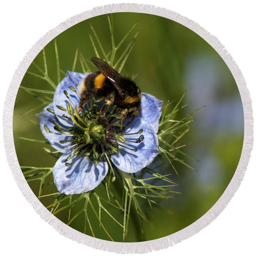 Bee Round Beach Towel featuring the photograph Bee Collecting Pollen by Chris Day