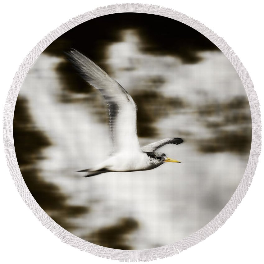 Gulls Round Beach Towel featuring the photograph Bird Flying In The Clouds by Jorgo Photography - Wall Art Gallery