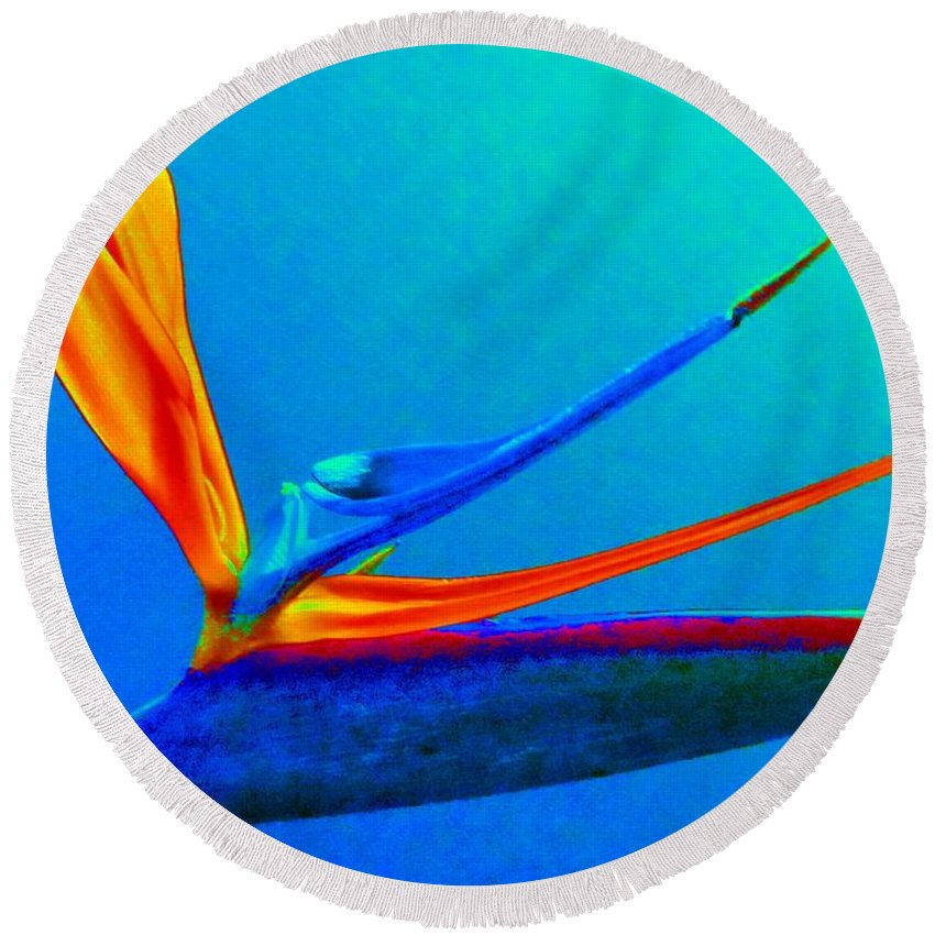 Flower Round Beach Towel featuring the photograph Bird Of Paradise With Blue Background by Susan Carella