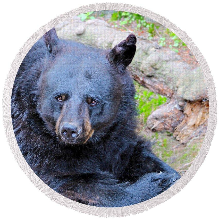 Alaska Round Beach Towel featuring the photograph Black Bear by Paul Fell