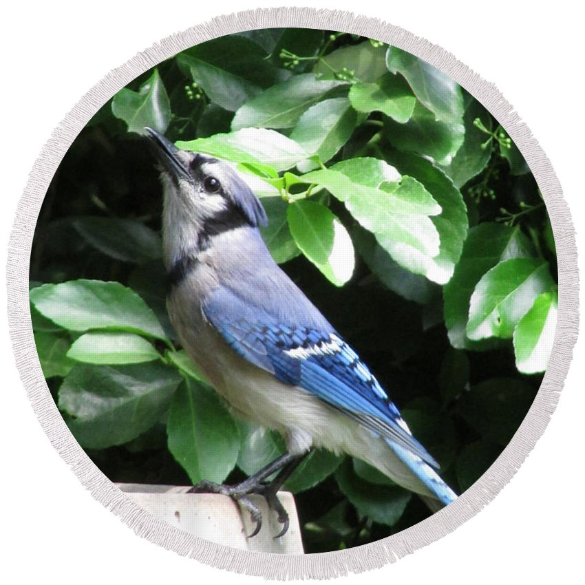Bird Round Beach Towel featuring the photograph Blue Jay 1 by Jamie Smith