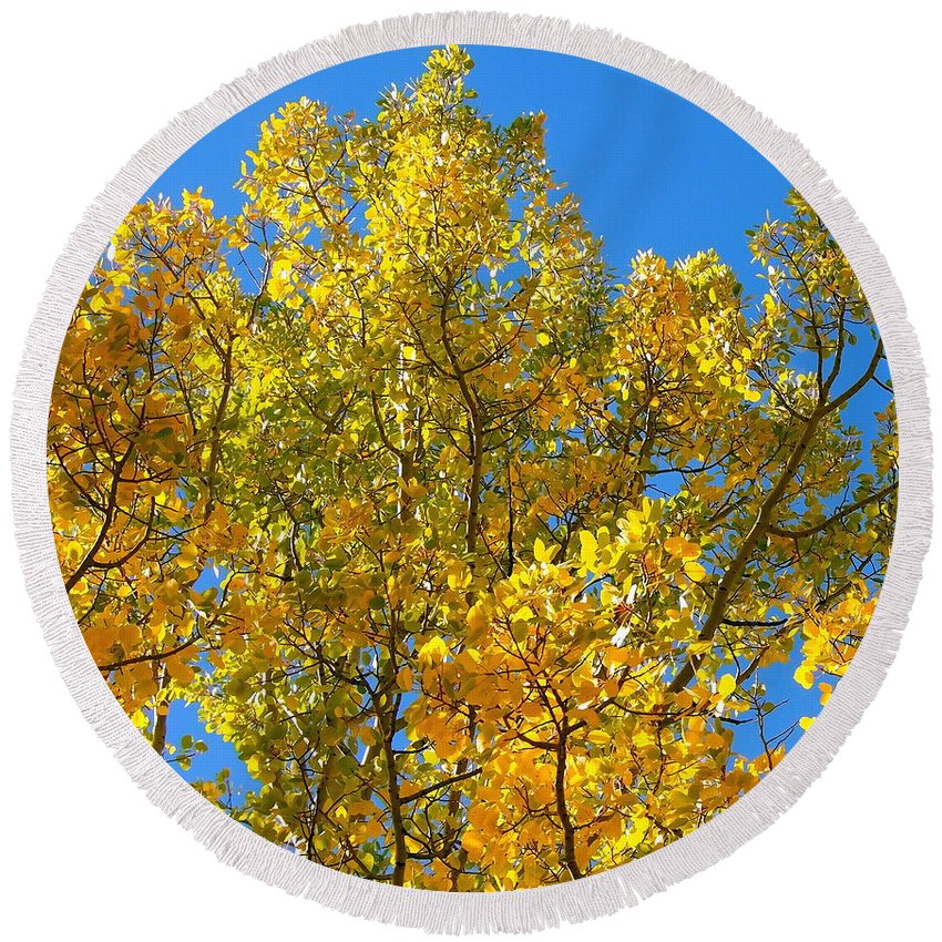 Aspen Round Beach Towel featuring the photograph Blue Skies And Golden Aspen Trees by Amy McDaniel