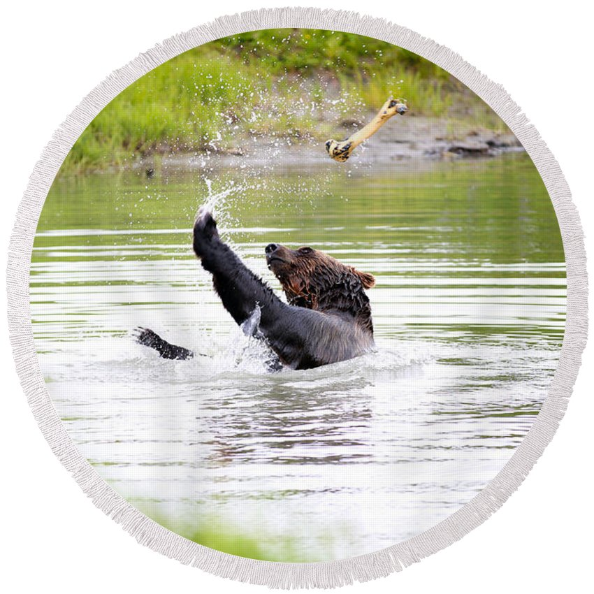 Animal Round Beach Towel featuring the photograph Brown Bear Playing With A Bone by Paul Fell