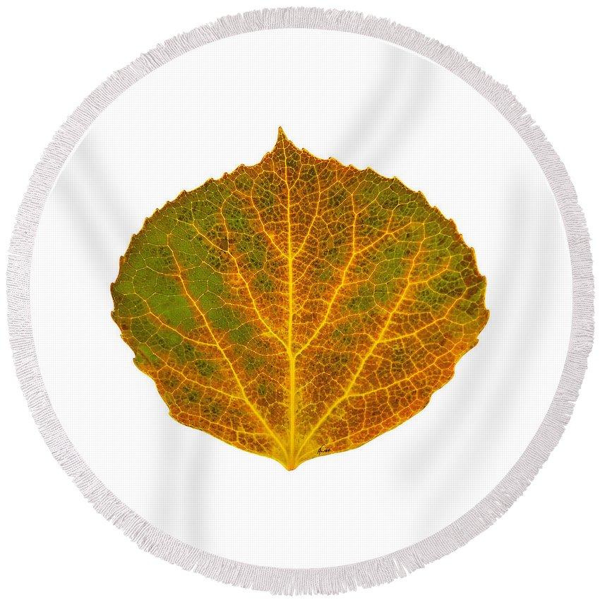 Aspen Leaf Round Beach Towel featuring the digital art Brown Green Orange And Yellow Aspen Leaf 1 by Agustin Goba
