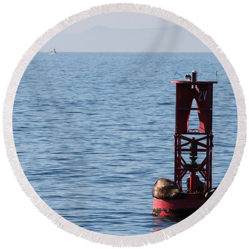 Buoy Round Beach Towel featuring the photograph Buoy Sea Lions by Henrik Lehnerer