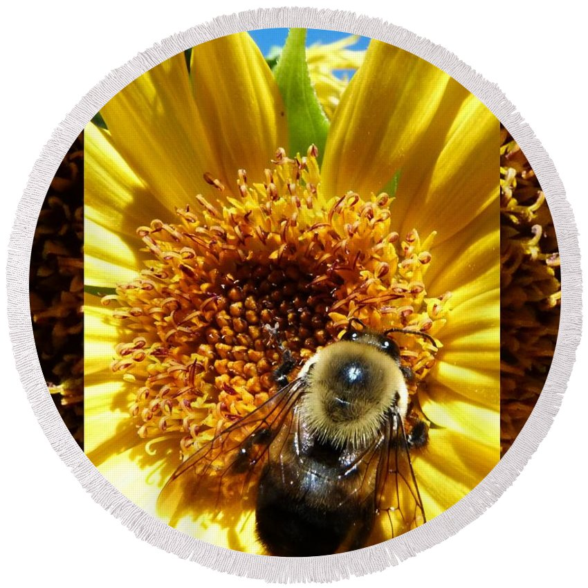 Bumble Bees Round Beach Towel featuring the photograph 1 Busy Bumble L by Dale Crum