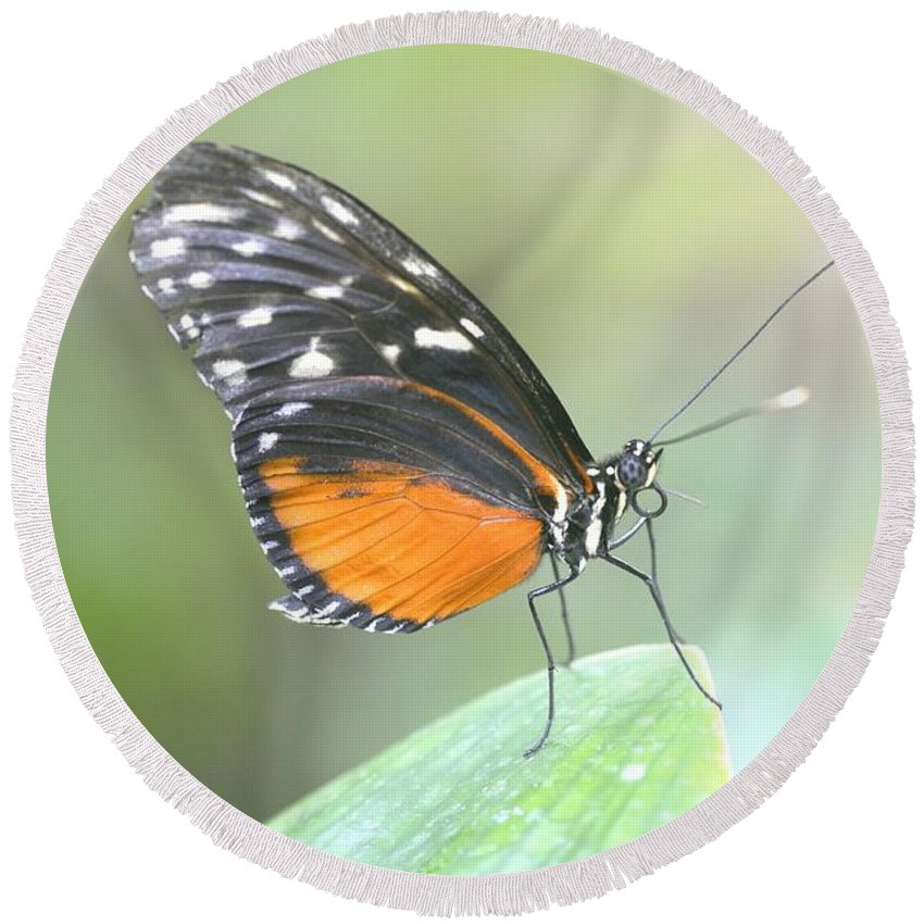 Butterfly Round Beach Towel featuring the photograph Butterfly by Jenny Potter