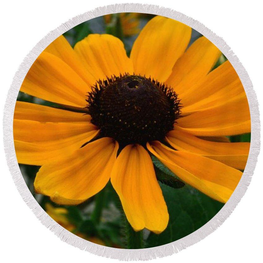 Butterscotch Daisy Round Beach Towel featuring the photograph Butterscotch Daisy by Jeannie Rhode