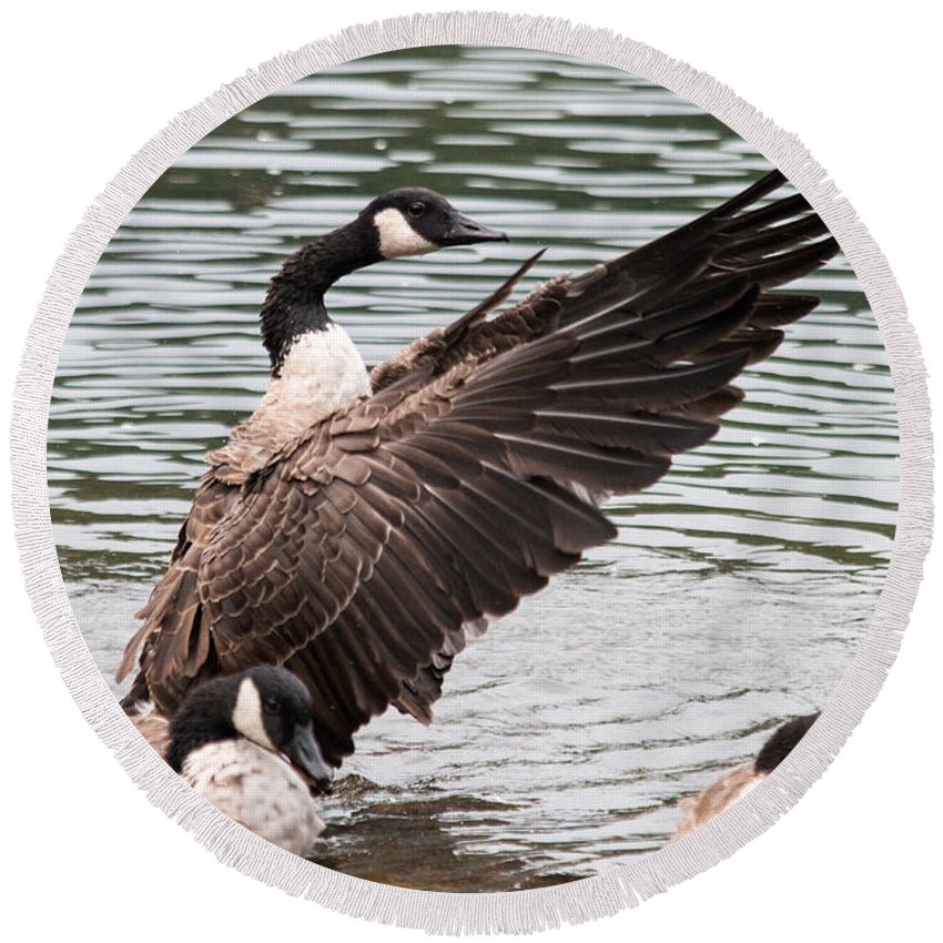 Wingspan Round Beach Towel featuring the photograph Canada Goose by Gaurav Singh
