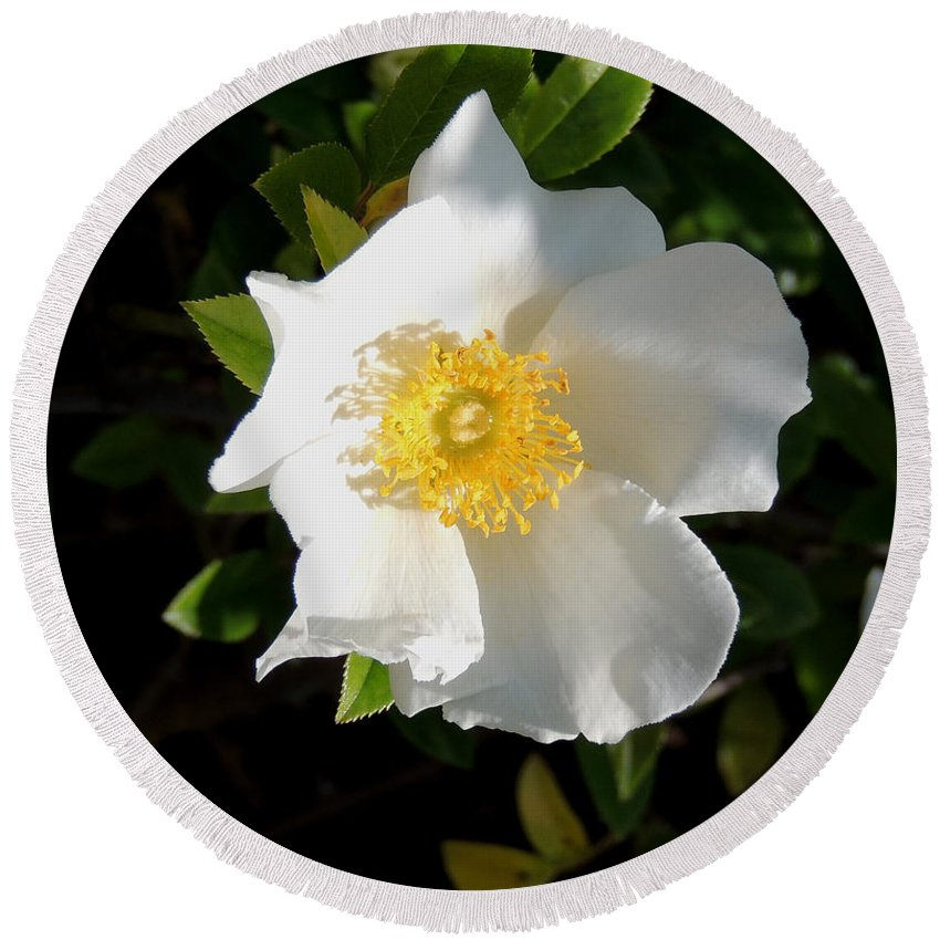 Digital Photography Round Beach Towel featuring the photograph Cherokee Rose by Kim Pate
