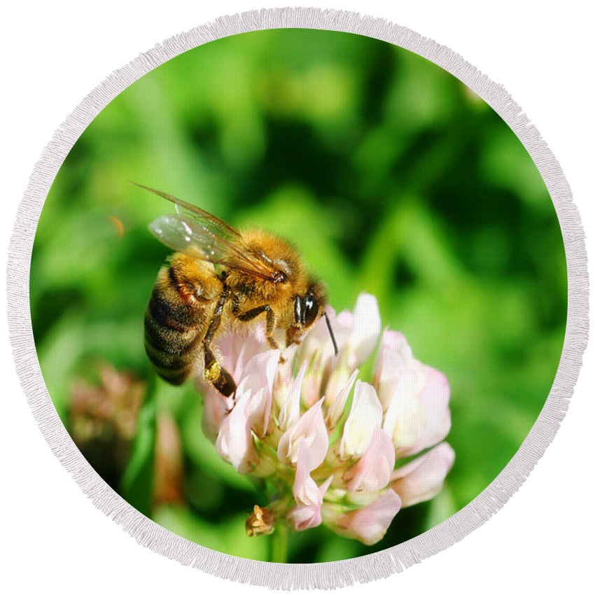 Bee Round Beach Towel featuring the photograph Clover Bee by Jorgo Photography - Wall Art Gallery