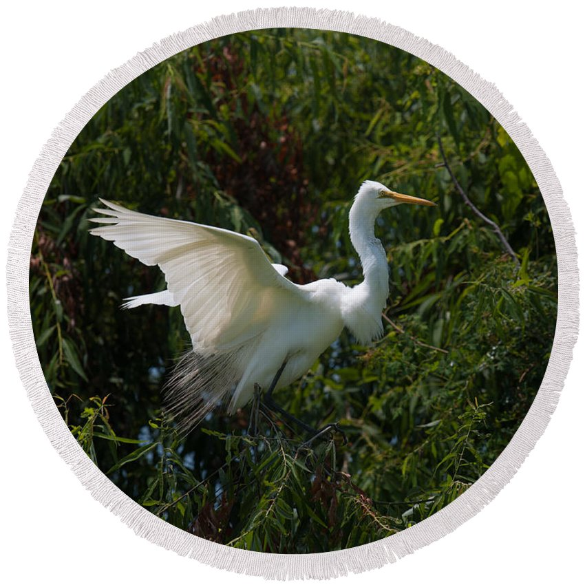 Egret Round Beach Towel featuring the photograph Common Egret by Dale Powell
