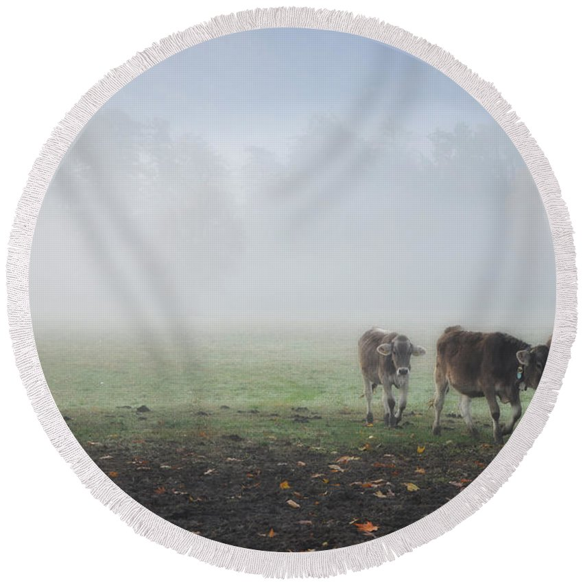 Cows Round Beach Towel featuring the photograph Cows by Mats Silvan