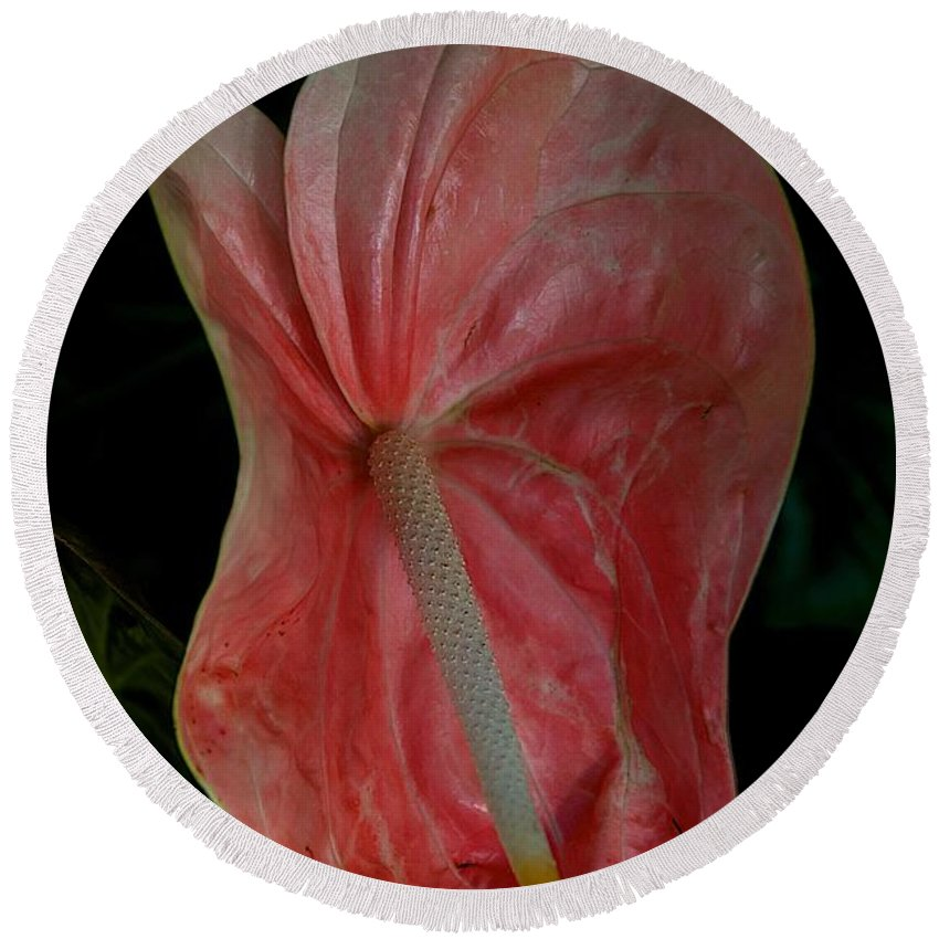 Flower Round Beach Towel featuring the photograph Curves by Joseph Yarbrough