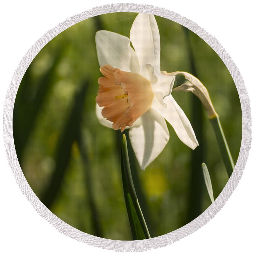 Sign Of Spring Round Beach Towel featuring the photograph Daffodil by Tracy Winter