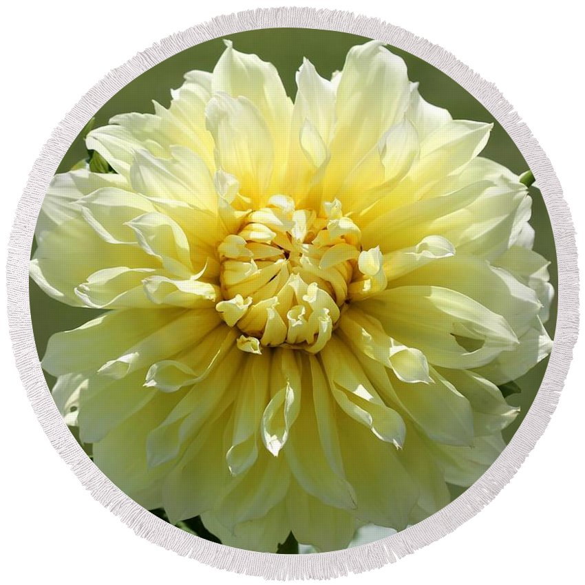 Mccombie Round Beach Towel featuring the photograph Dahlia Named Kelvin Floodlight by J McCombie