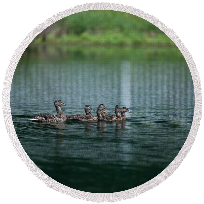 Ducks Round Beach Towel featuring the photograph Duck Pond by Dale Powell