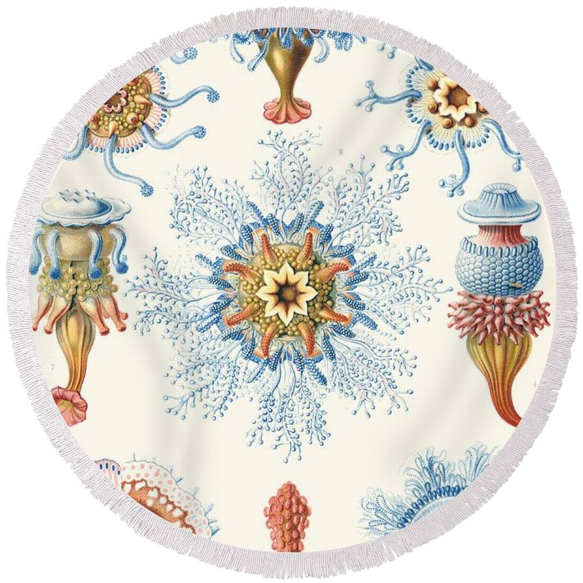 Vertical Round Beach Towel featuring the drawing Examples Of Siphonophorae by Ernst Haeckel