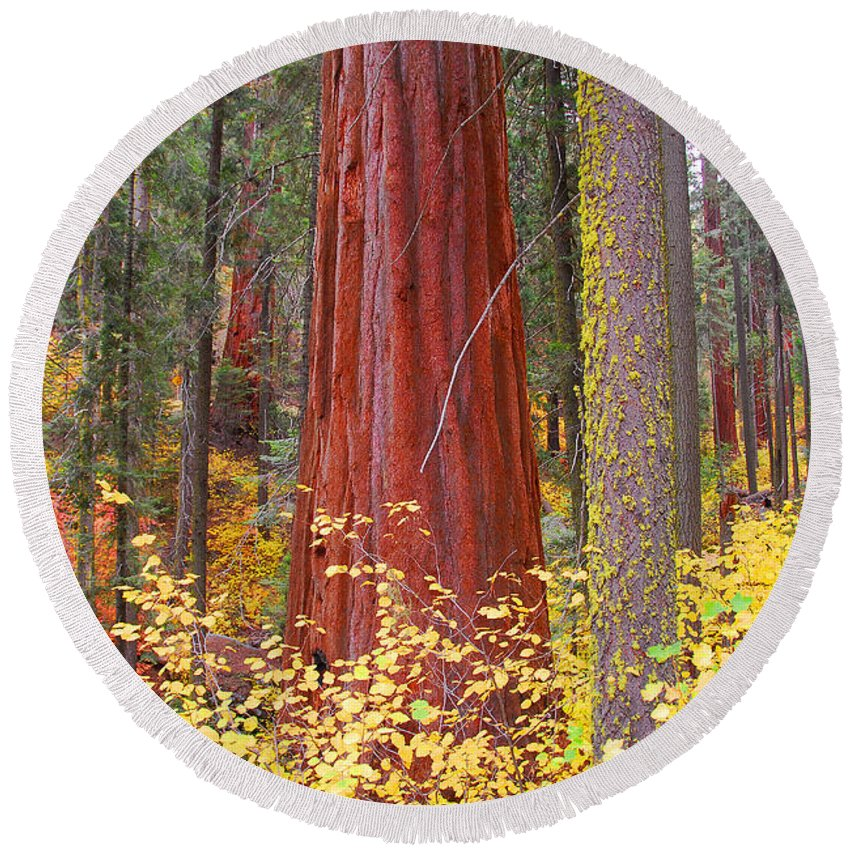 Sequoia National Park Round Beach Towel featuring the photograph Fall In The Forest by Lynn Bauer
