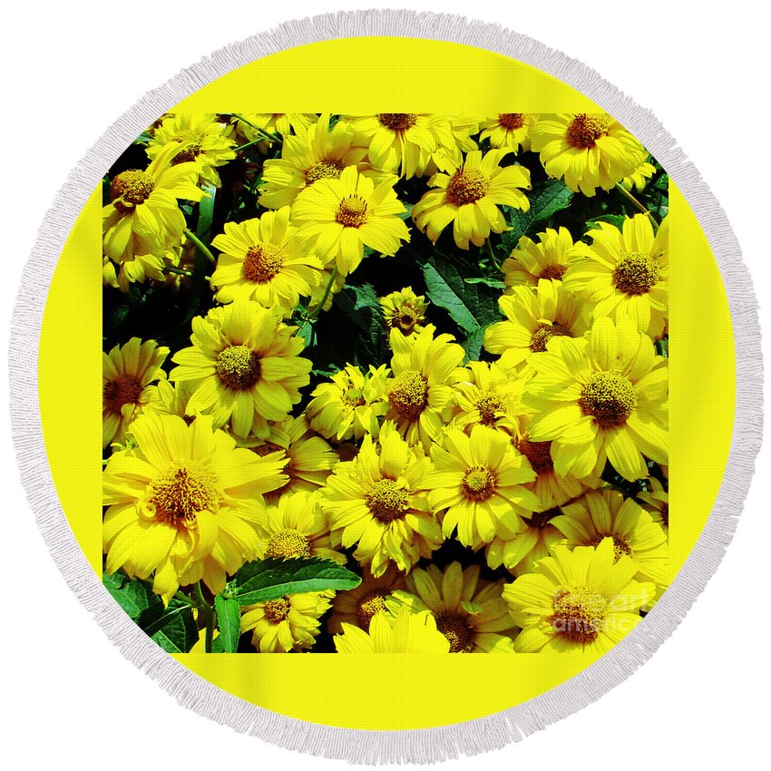 Yellow Round Beach Towel featuring the photograph Field Of Daisies by Kevin Fortier