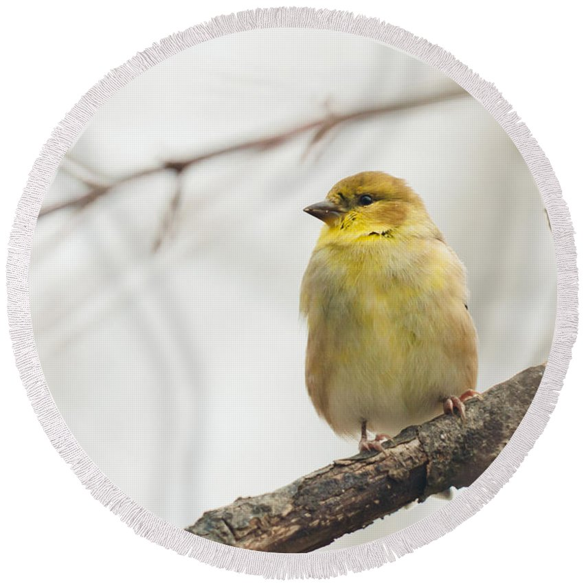 Landscapes Round Beach Towel featuring the photograph Finch by Cheryl Baxter