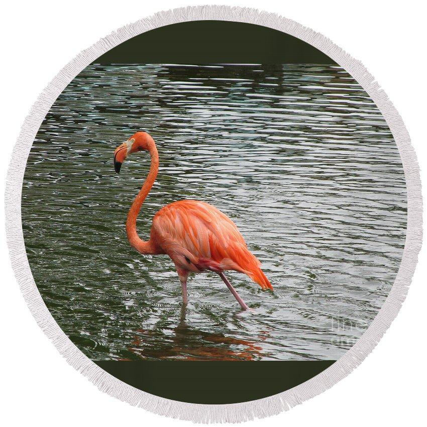 Bird Round Beach Towel featuring the photograph Flamingo by Jamie Smith
