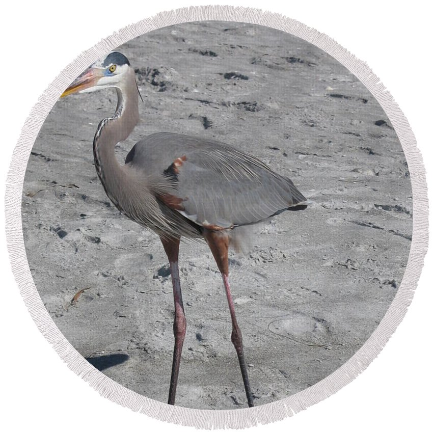 Heron Round Beach Towel featuring the photograph Great Blue Heron On The Beach by Christiane Schulze Art And Photography