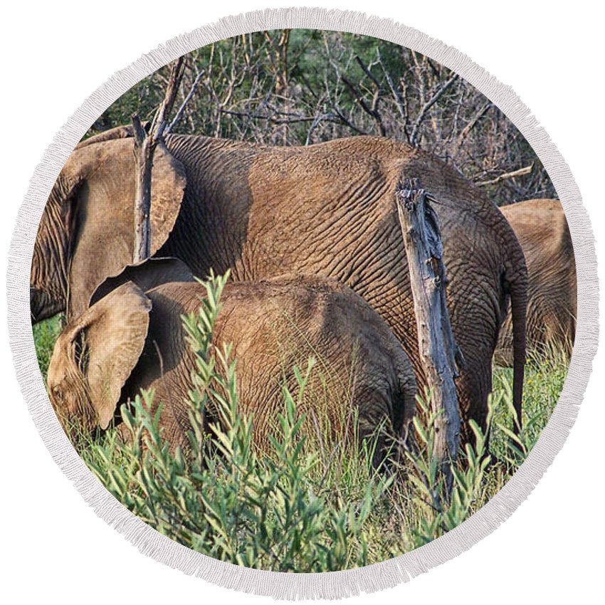 Elephant Bull Round Beach Towel featuring the photograph Greener Pastures by Douglas Barnard