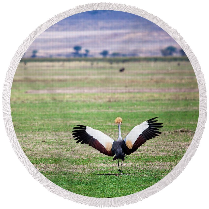 Crane Round Beach Towel featuring the photograph Grey Crowned Crane. The National Bird Of Uganda by Michal Bednarek