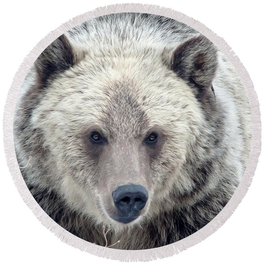 Grizzly Bear Round Beach Towel featuring the photograph Griz by Jack Bell