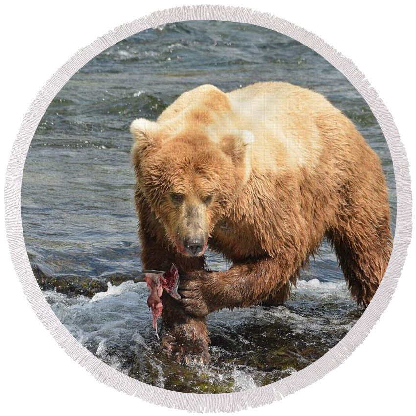 Grizzly Bear Round Beach Towel featuring the photograph Grizzly Bear Salmon Fishing by Patricia Twardzik