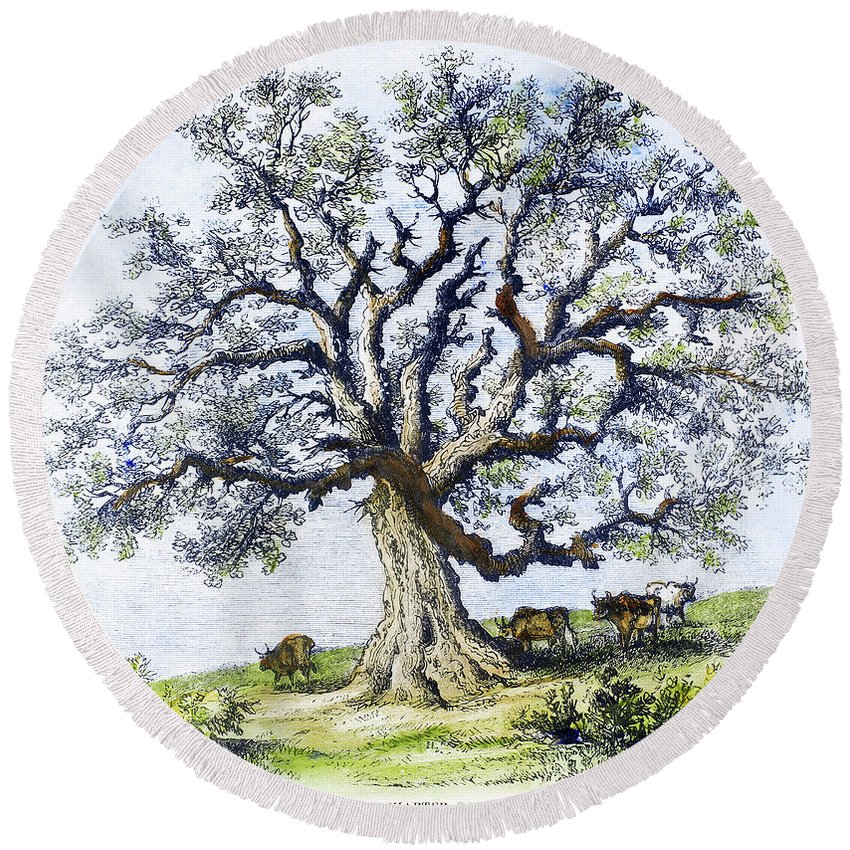 1687 Round Beach Towel featuring the painting Hartford Charter Oak by Granger