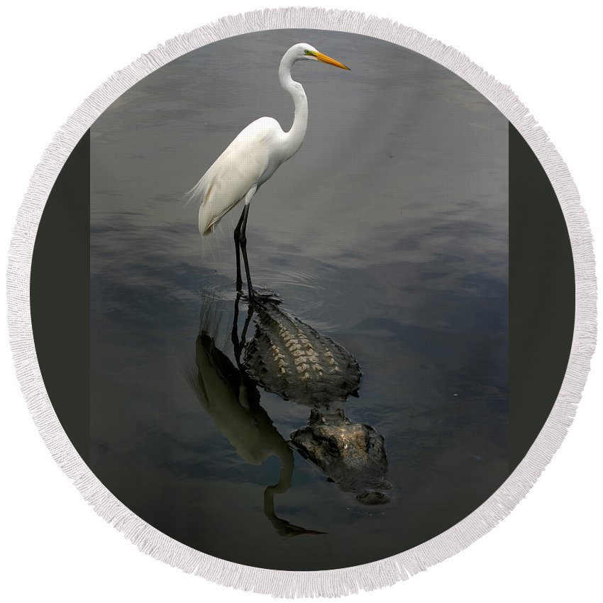 Alligator Round Beach Towel featuring the photograph Hitch Hiker by Anthony Jones