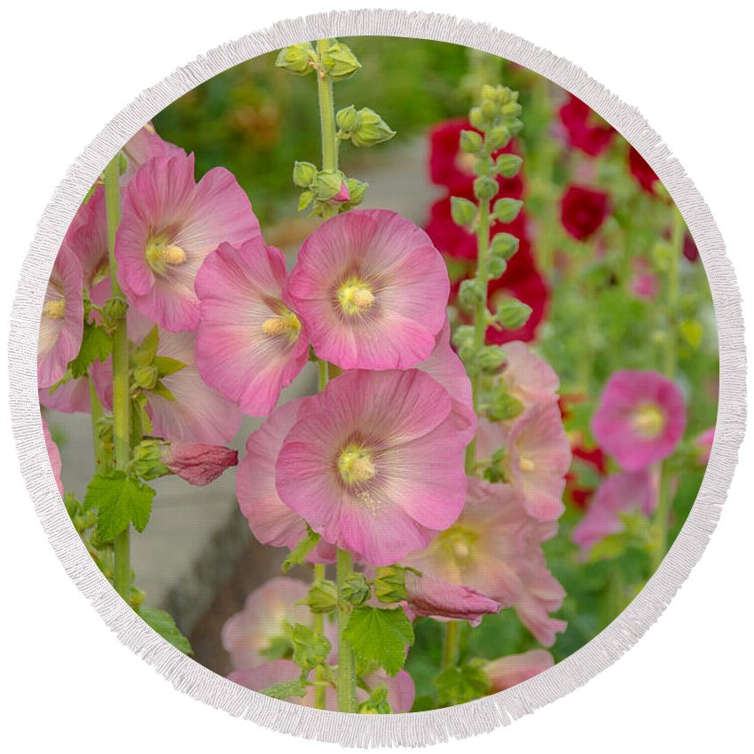 Country Round Beach Towel featuring the photograph Hollyhocks by Cheryl Baxter